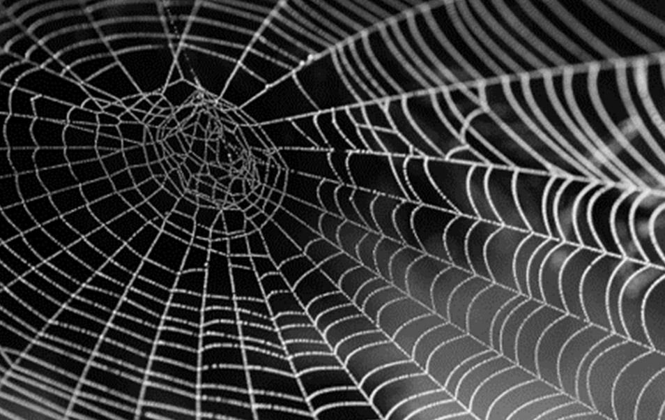 L'Innovation dans les matériaux grâce au biomimétisme